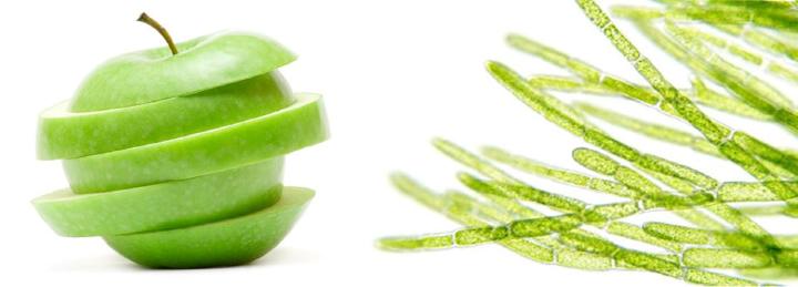 Rebirth Placentex Day Care Face Lotion (RM10) 50ml tế bào gốc táo xanh